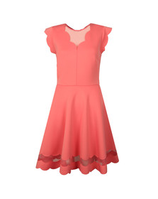Ted Baker Womens Orange Sharlot Mesh Paneled Scallop Dress