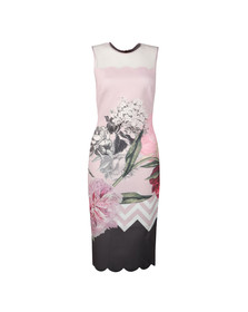 Ted Baker Womens Pink Arionah Palace Gardens Scallop Bodycon