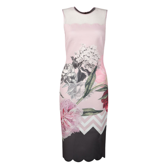 Ted Baker Womens Pink Arionah Palace Gardens Scallop Bodycon main image