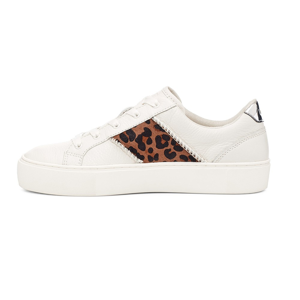 Dinale Exotic Trainer main image