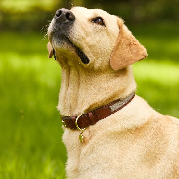 Holland Cooper Womens Brown HC Classic Dog Collar main image