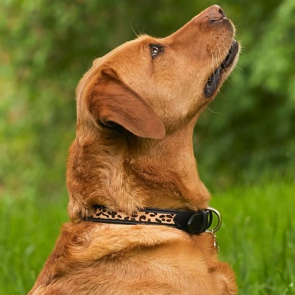 Holland Cooper Womens Black HC Classic Dog Collar