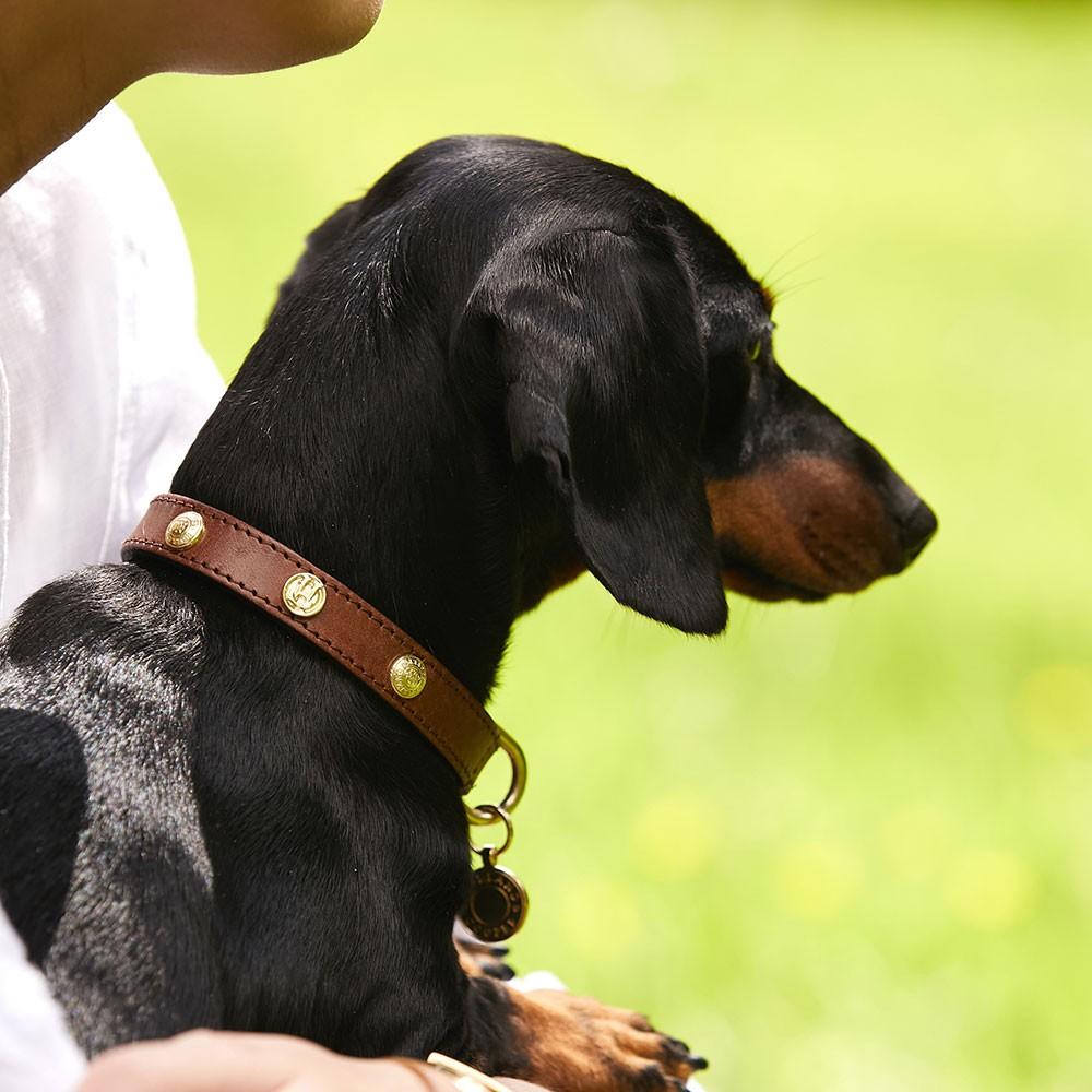 HC Studded Dog Collar main image