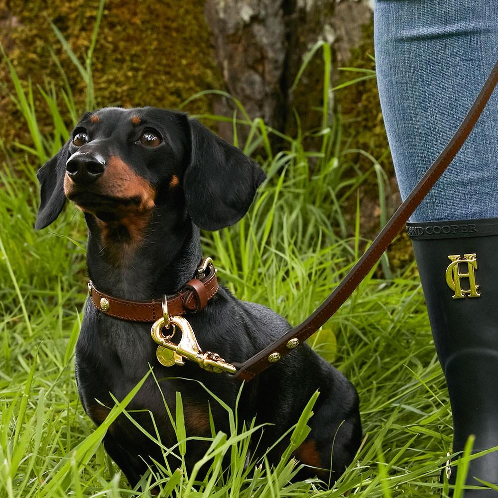 Classic Dog Lead main image